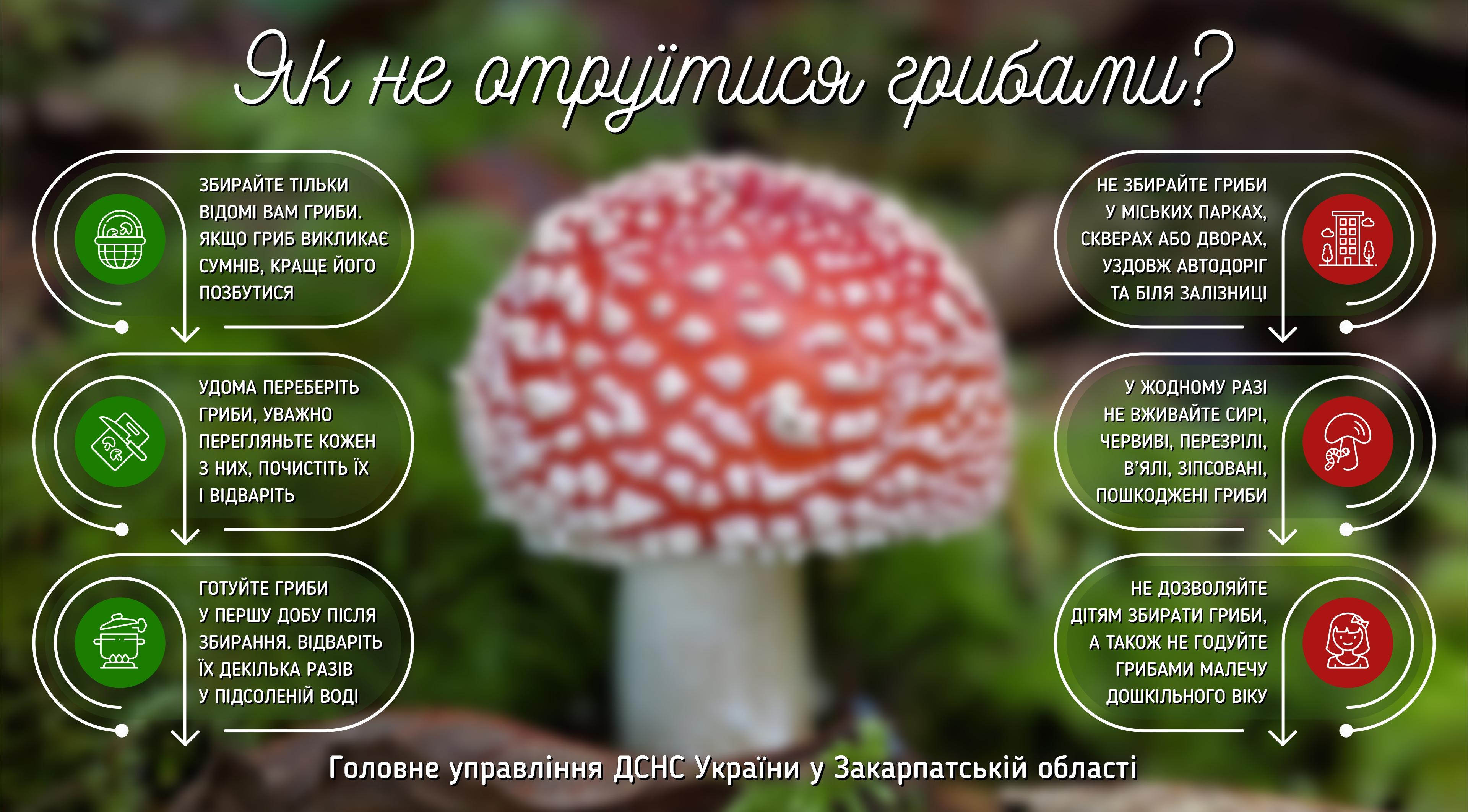 hriby_gu.jpg